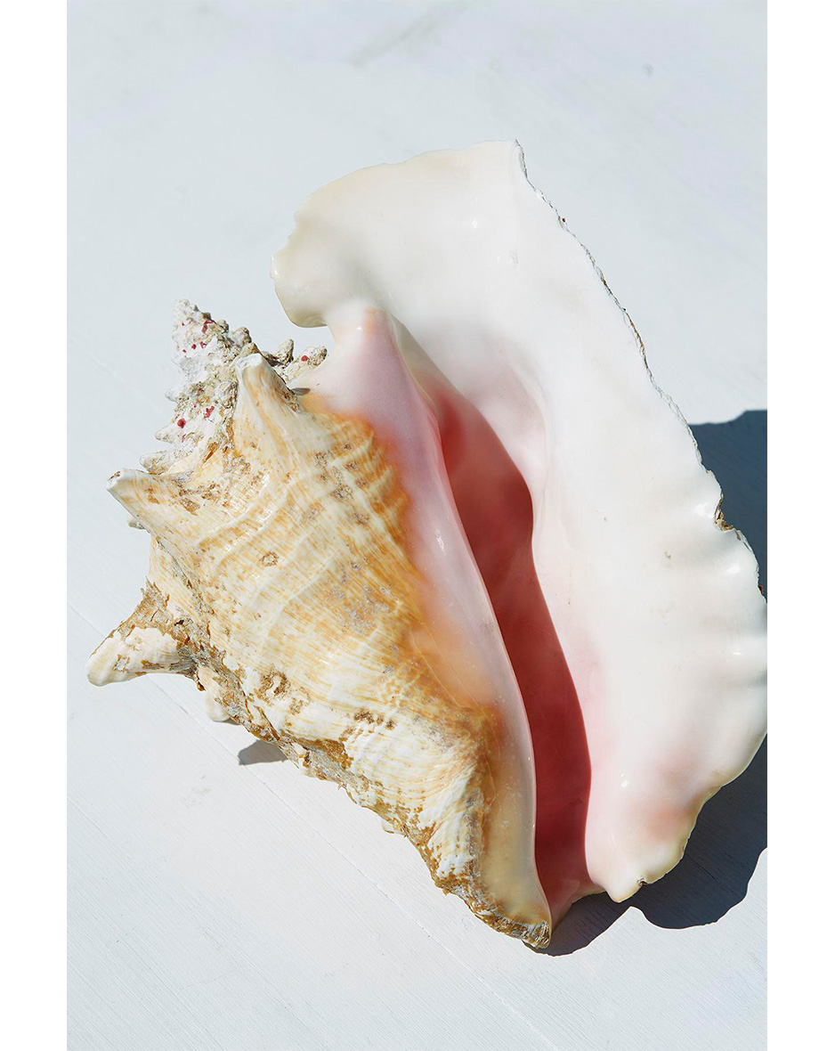 Roe Ethridge, Conch Shell, 2015