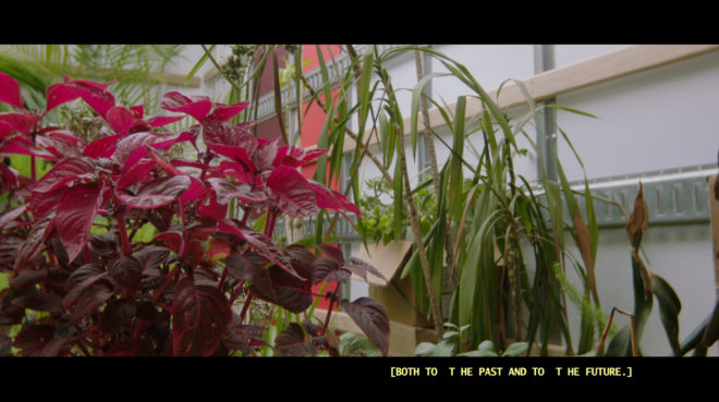 Alison O'Daniel, Still from The Tuba Thieves (Scene 55: The Plants are Protected), 2013