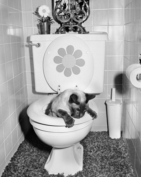 "Chop Chop Using the Toilet,"" 1973.Photographs by Michael Jang / Courtesy Atelier Éditions"